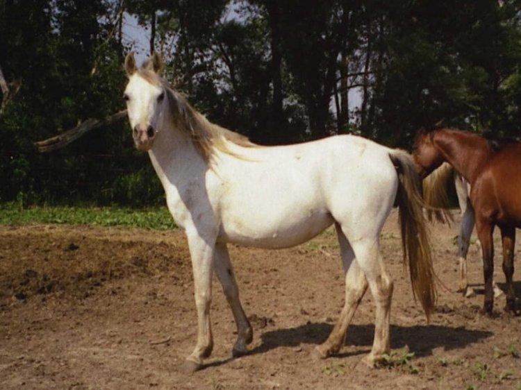 wisteria CF