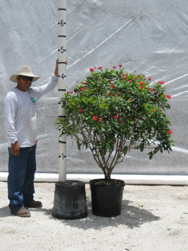 Jatropha Nursery