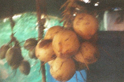Scenes of Life in Tripunitura & Kochi: coconuts make a fine beverage and snack