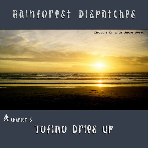 Tofino Dries up – Rainforest Dispatches, chapter 3/9