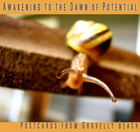 Pod cover - Postcards from Gravelly Beach - Awakening Dawn Potential