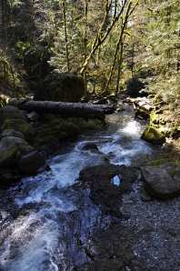 River From the Larch Mountain Trail