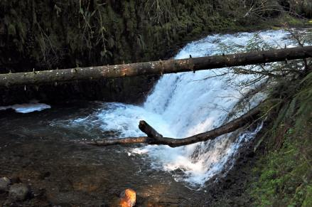 Cascade From the Larch Mountain Trail