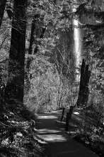 Multnomah Falls from the Trail