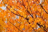 Hudson River Fall Foliage Cruise 2013-19