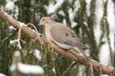 Jan 06 2015 Snowbirds-007