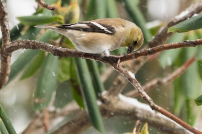 Jan 06 2015 Snowbirds-010