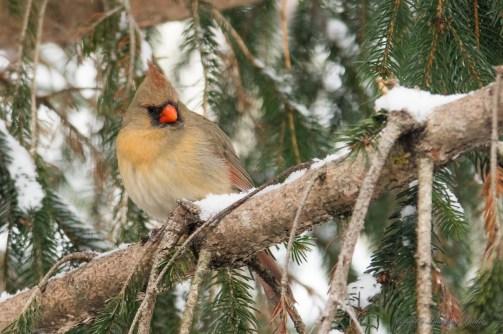 Jan 06 2015 Snowbirds-016