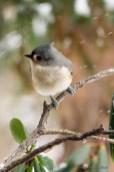 Jan 06 2015 Snowbirds-017