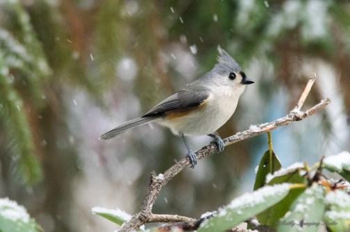 Jan 21 2015 Snowbirds-004