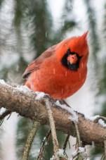 Jan 21 2015 Snowbirds-018