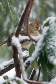 March 5 2015 Snowbirds-001