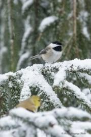 March 5 2015 Snowbirds-006