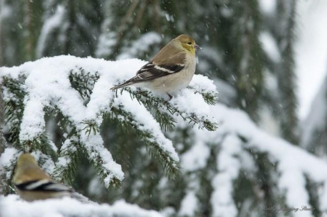 March 5 2015 Snowbirds-012