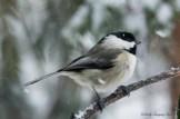 March 5 2015 Snowbirds-013