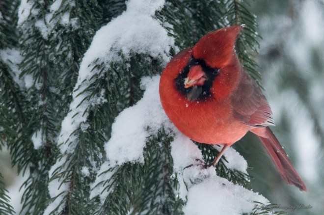 March 5 2015 Snowbirds-018