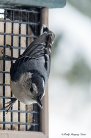 March 5 2015 Snowbirds-020