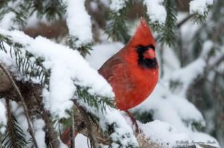 March 5 2015 Snowbirds-021