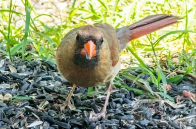 07 22 2015 Birds-009