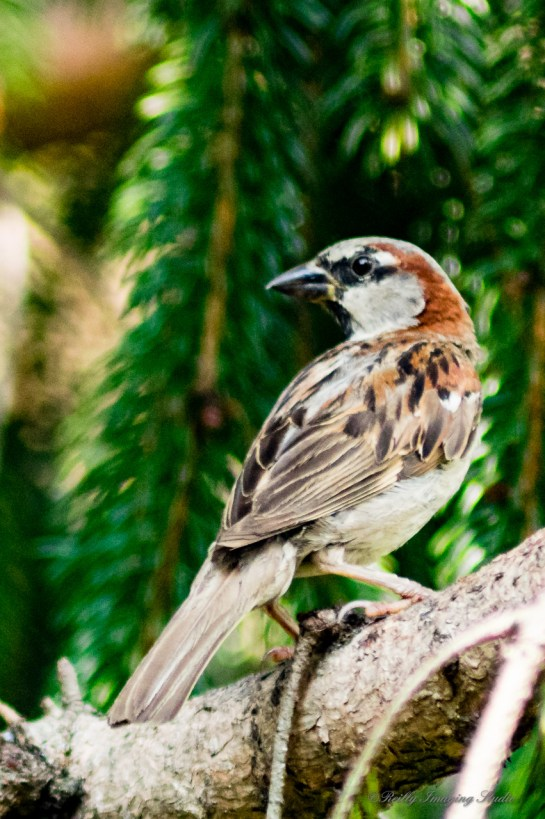 07 30 2015 Birds-001