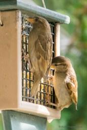 June 23 2015 Birds-04