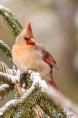Best Birds-04