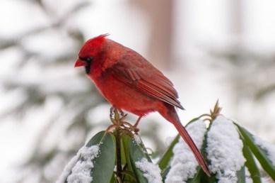 Best Birds-05