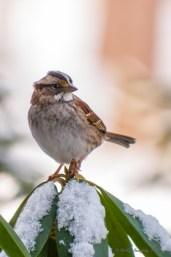 Best Birds-06