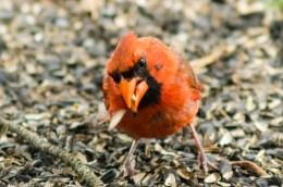 Best Birds-113