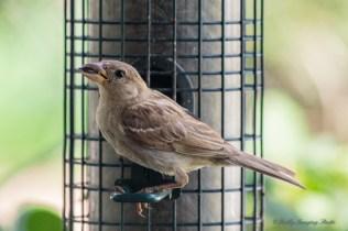 Best Birds-118