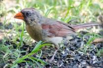 Best Birds-120
