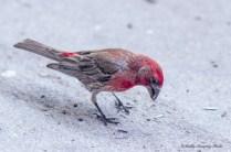 Best Birds-122