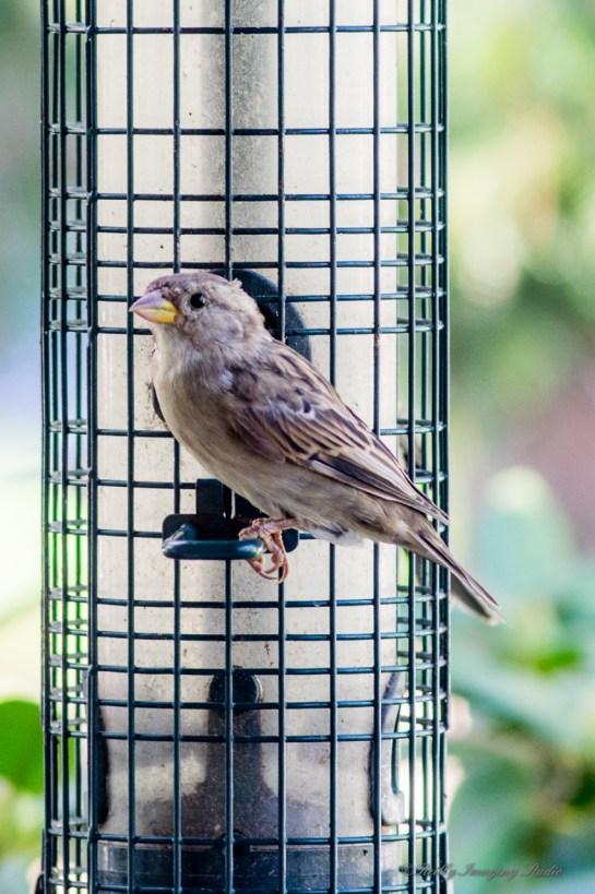 Best Birds-123