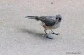 Best Birds-130