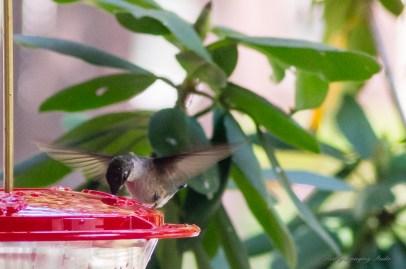 Best Birds-134