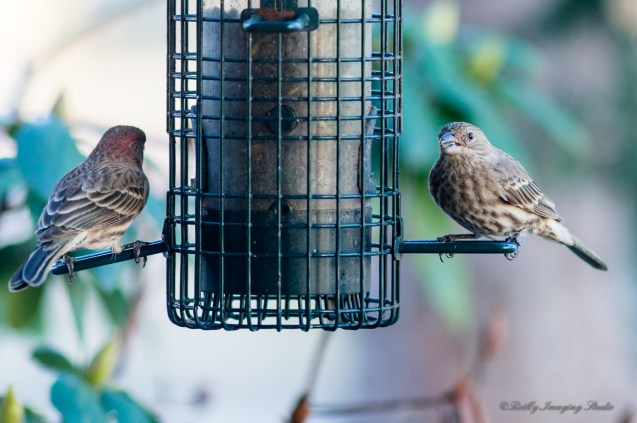 Best Birds-136