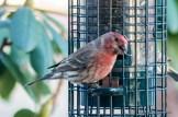 Best Birds-137