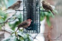 Best Birds-141