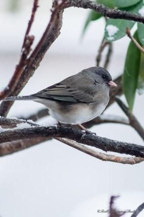 Best Birds-142