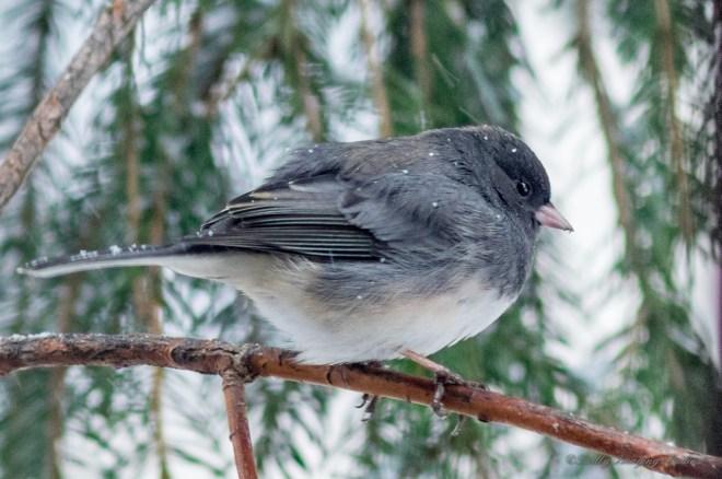 Best Birds-143