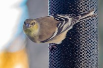 Best Birds-147