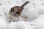 Best Birds-149