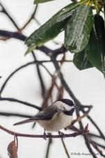 Best Birds-153