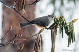 Best Birds-155