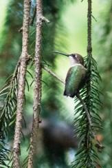 Best Birds-170