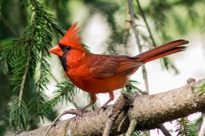 Best Birds-172