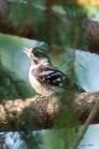 Best Birds-173