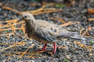 Best Birds-177