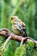 Best Birds-180
