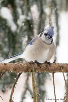 Best Birds-193